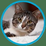 cat-visits