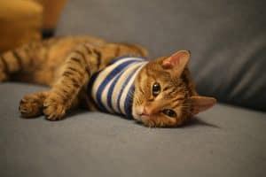 Pet Sitting Visit