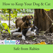 rabies