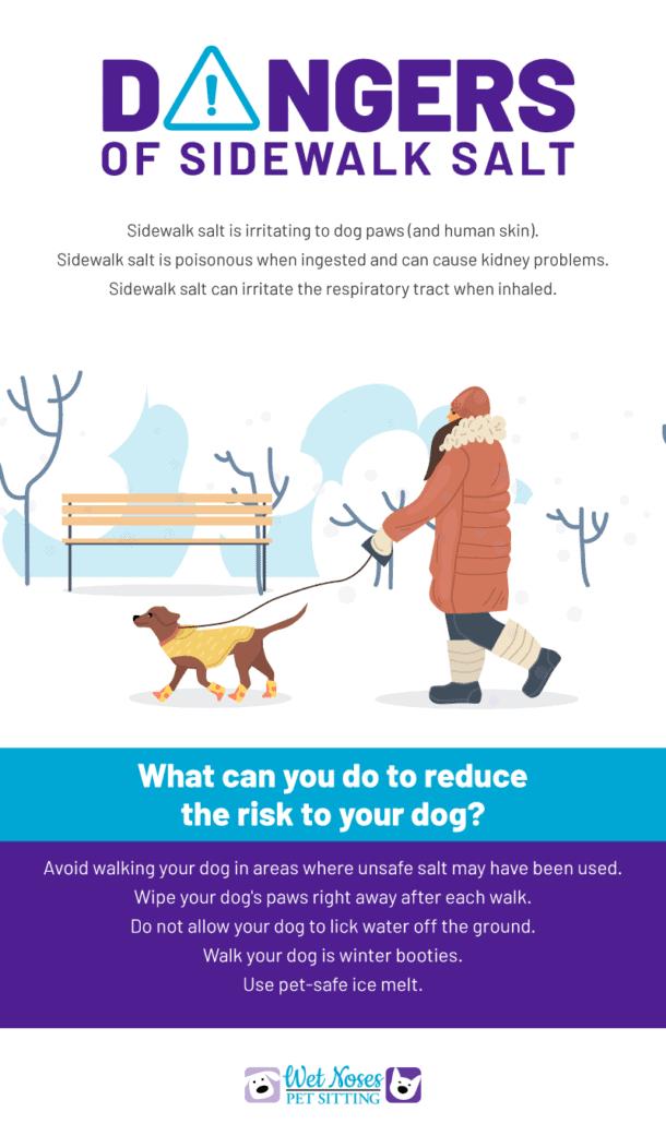 Dangers of Sidewalk Salt Infographic