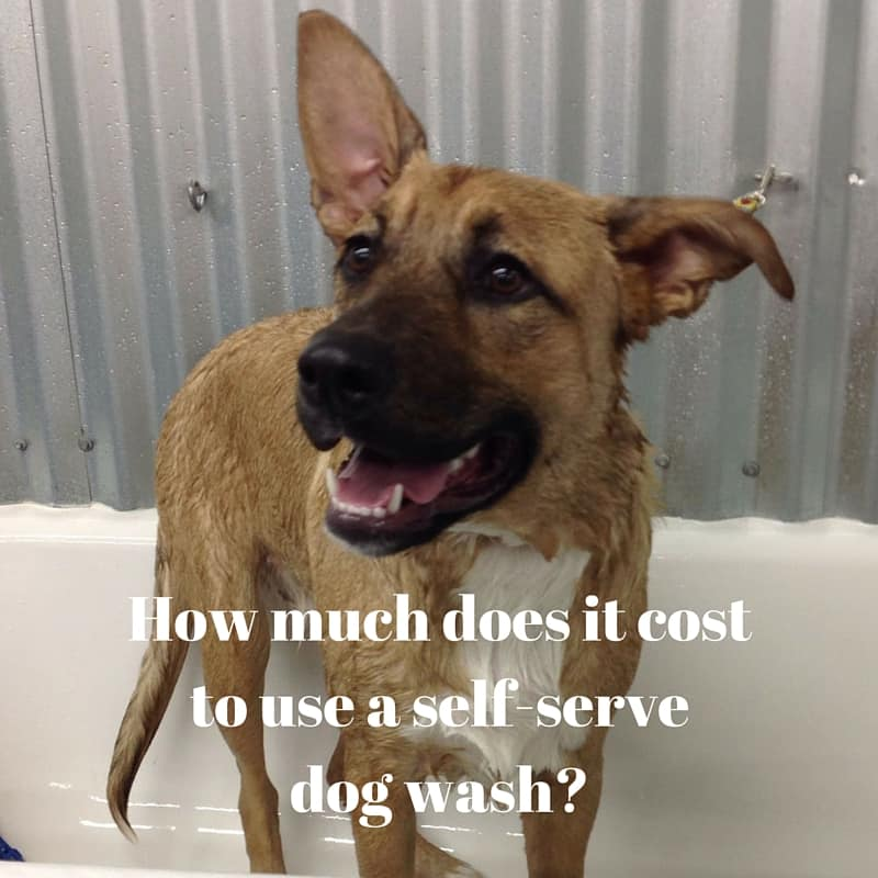 how much does it cost to use a self service dog wash wet noses pet sitters. Black Bedroom Furniture Sets. Home Design Ideas