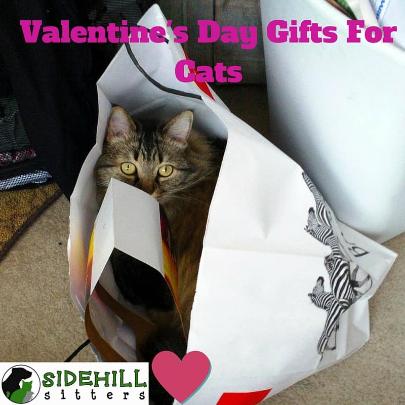 For Valentine S Day Cat Toys : Valentine s day gifts for cats wet noses pet sitters