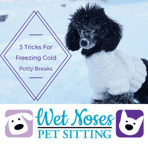 3 Tricks To Help Your Dog Go Potty When It S Cold Outside