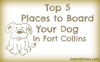 top 5 places to board your dog in fort collins wet noses