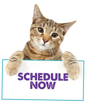 cat-schedule-now