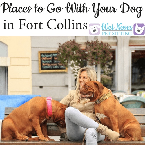 Places to go with your dog in fort collins wet noses recommendations solutioingenieria Gallery