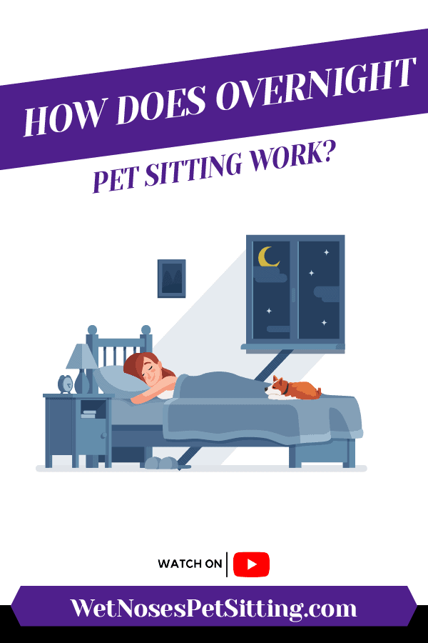 How Does Overnight Pet Sitting Work? Header