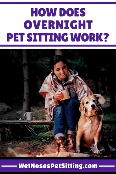 frequently asked questions wet noses pet sitting. Black Bedroom Furniture Sets. Home Design Ideas