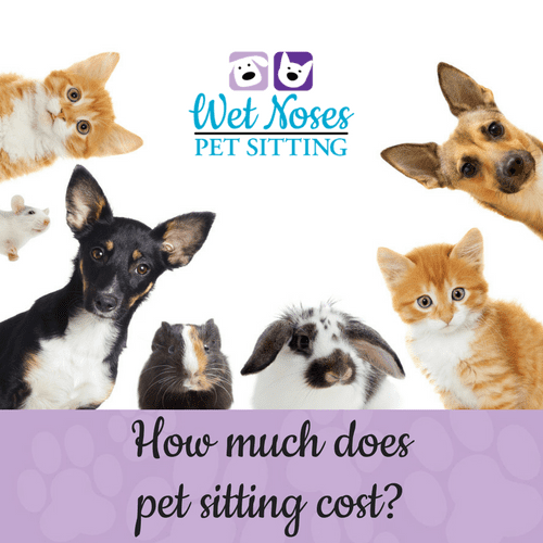 how much does a pet sitter cost wet noses pet sitters answers. Black Bedroom Furniture Sets. Home Design Ideas