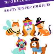 Top 3 Halloween Costume Safety Tips For Your Pets Header