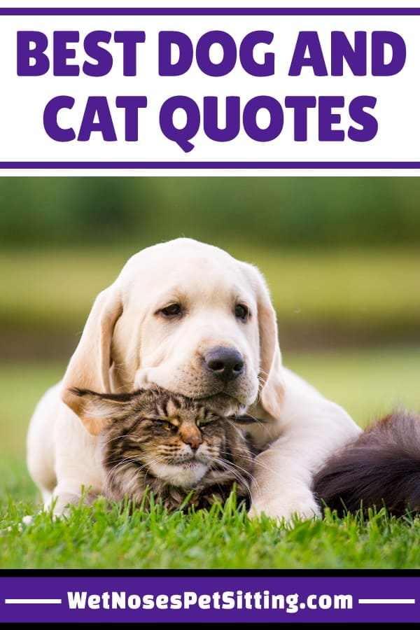 Best Dog and Cat Quotes - Wet Noses Pet Sitting