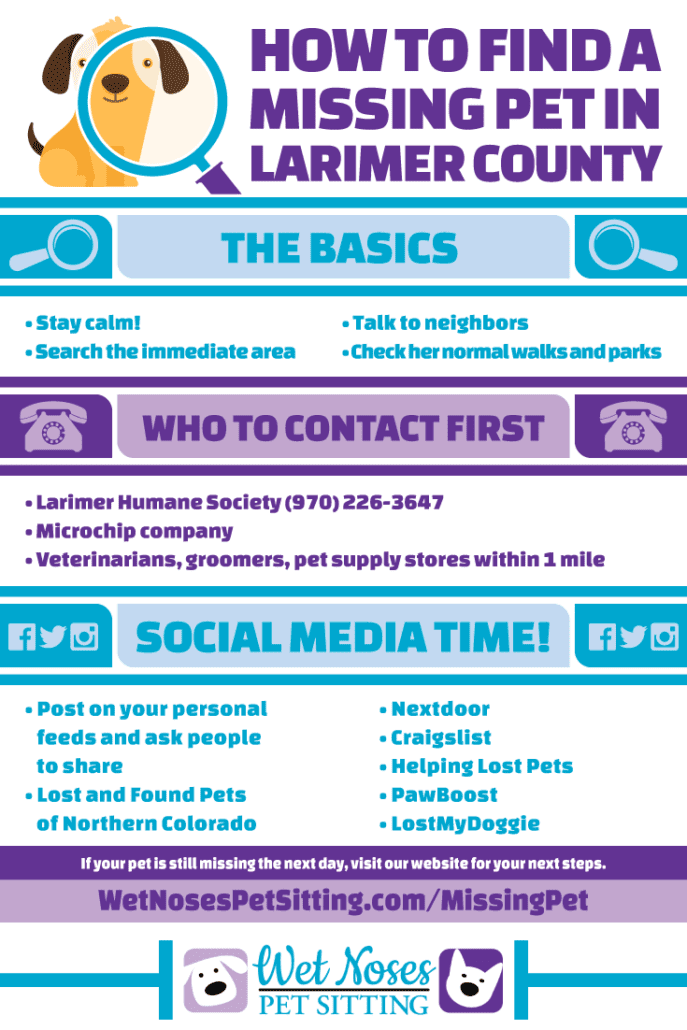 Infographic instructions missing pet Larimer County
