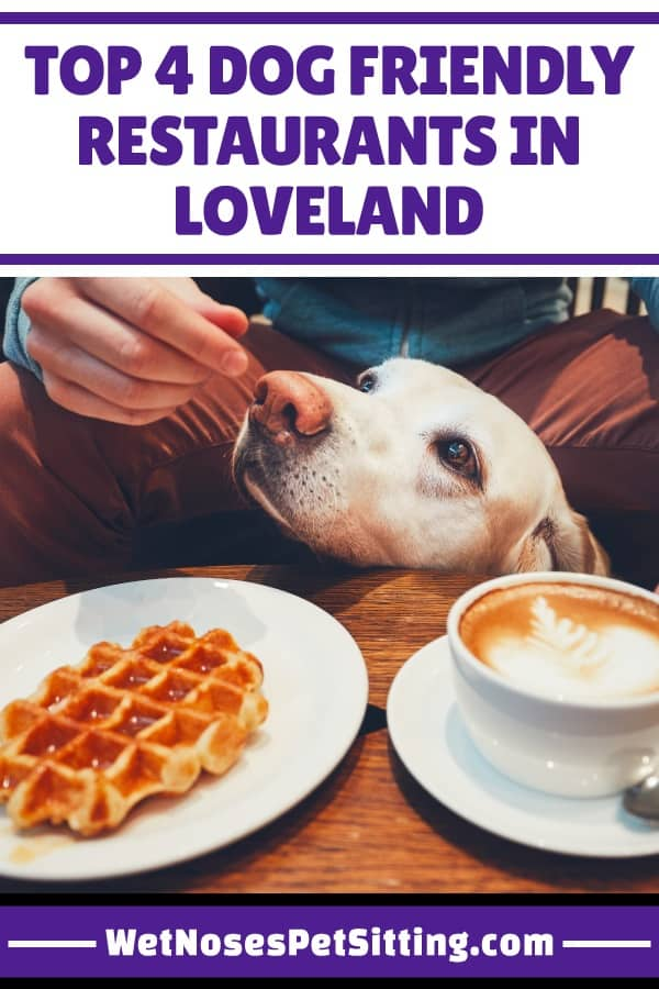 Top 4 Dog Friendly Restaurants in Loveland - Wet Noses Pet