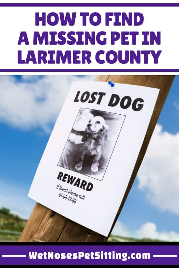 Loosing A Pet Can Be Extremely Scary Especially If You Do Not Know Where To Start Looking There Is Lot Of Information Out On How Find Missing