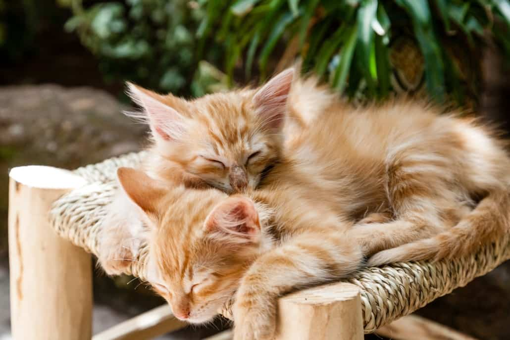 Orange kittens sleeping on stool