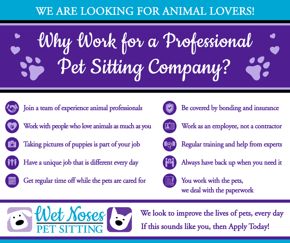 Reasons why to work for a professional pet sitting company