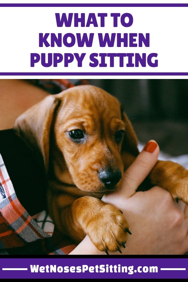 What To Know When Puppy Sitting Wet Noses Pet Sitting