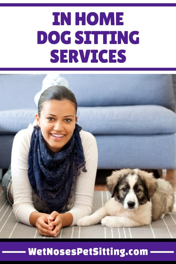 in home dog sitting services wet noses pet sittingin home dog sitting services are awesome when you are leaving town you want to make sure your dog is well taken care of you could ask a friend or family