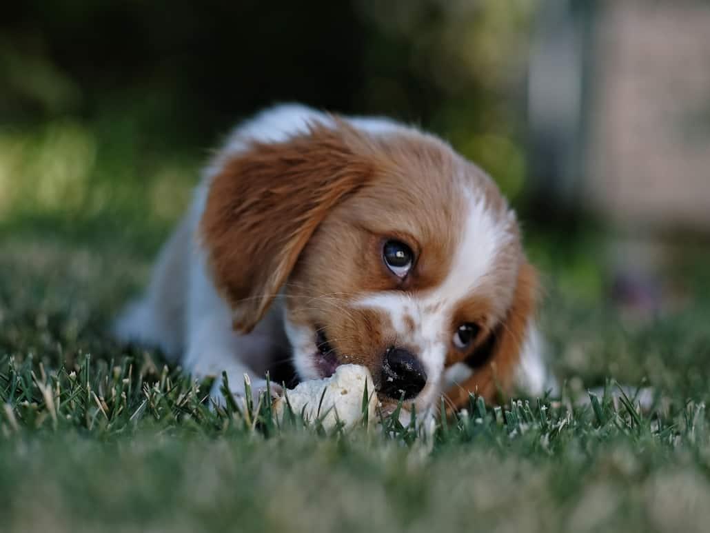Puppy sitting cute puppy