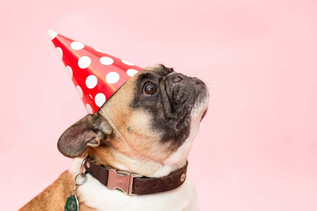 Gift for Dog Sitter - dog with birthday hat