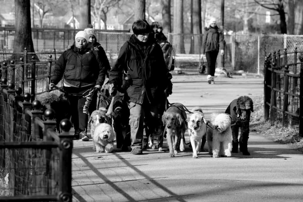 Group of dog walkers
