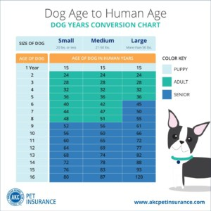 Dog Years Chart Wet Noses Pet Sitting