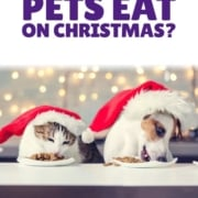 What Can Your Pets Eat on Christmas Header