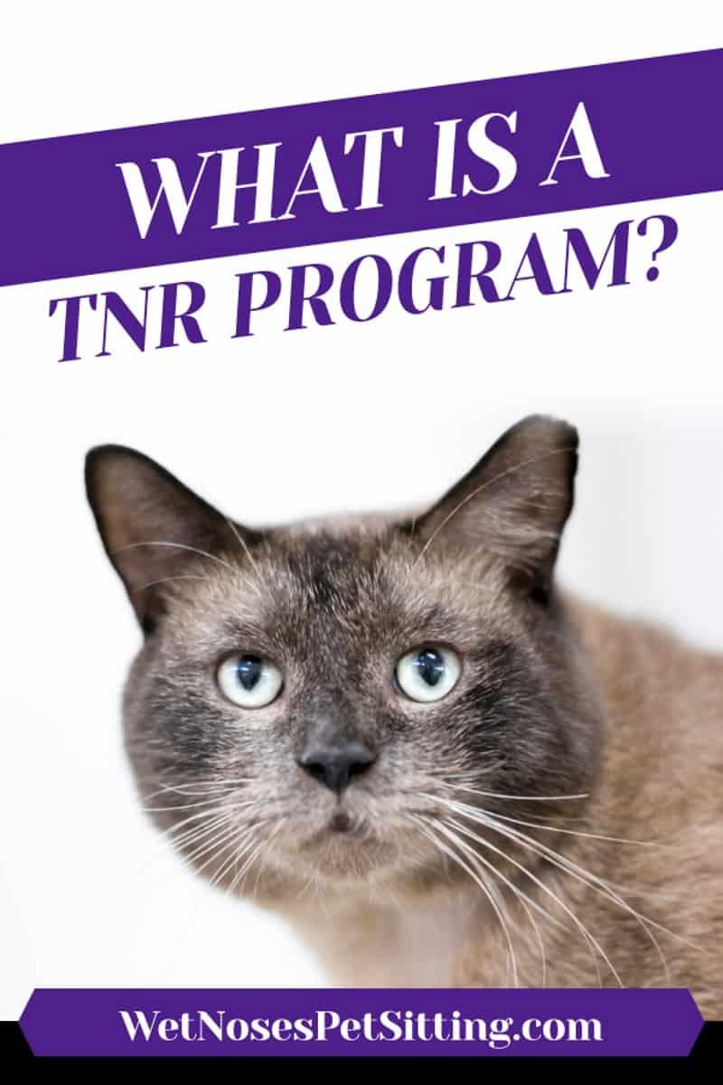 What is a Trap Neuter Release Program Header