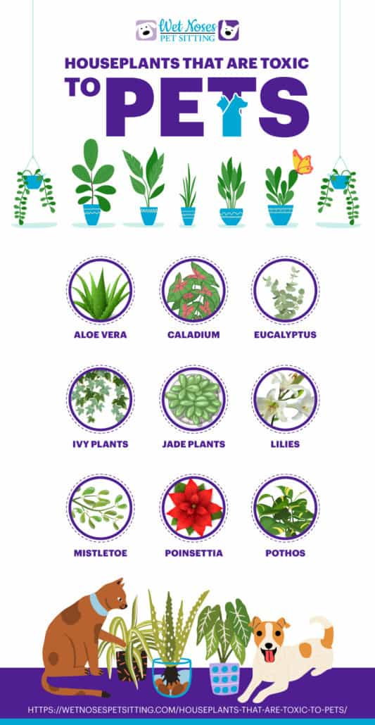 Houseplants that are toxic to pets Infographic