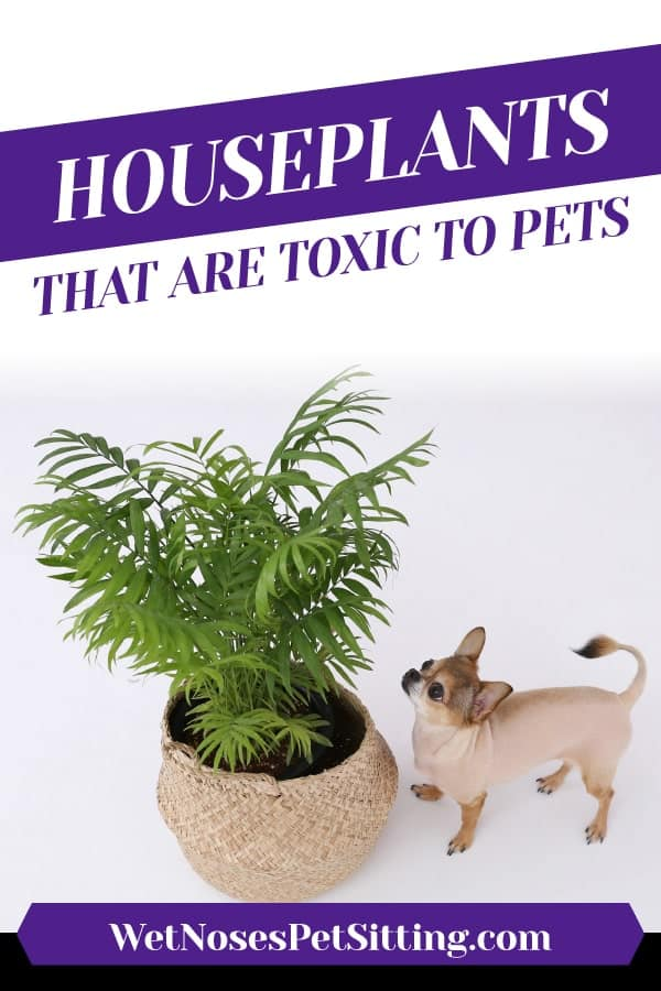 Houseplants That Are Toxic to Pets Header