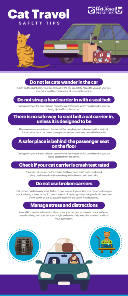 Cat Travel Safety Tips