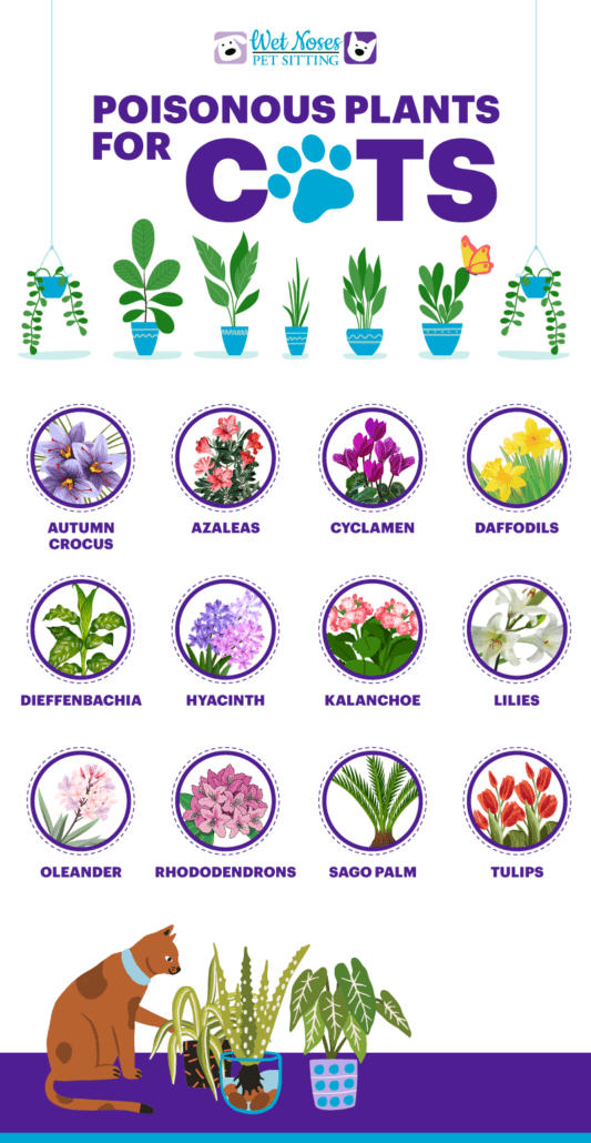 Poisonous Plants for Cats Infographic