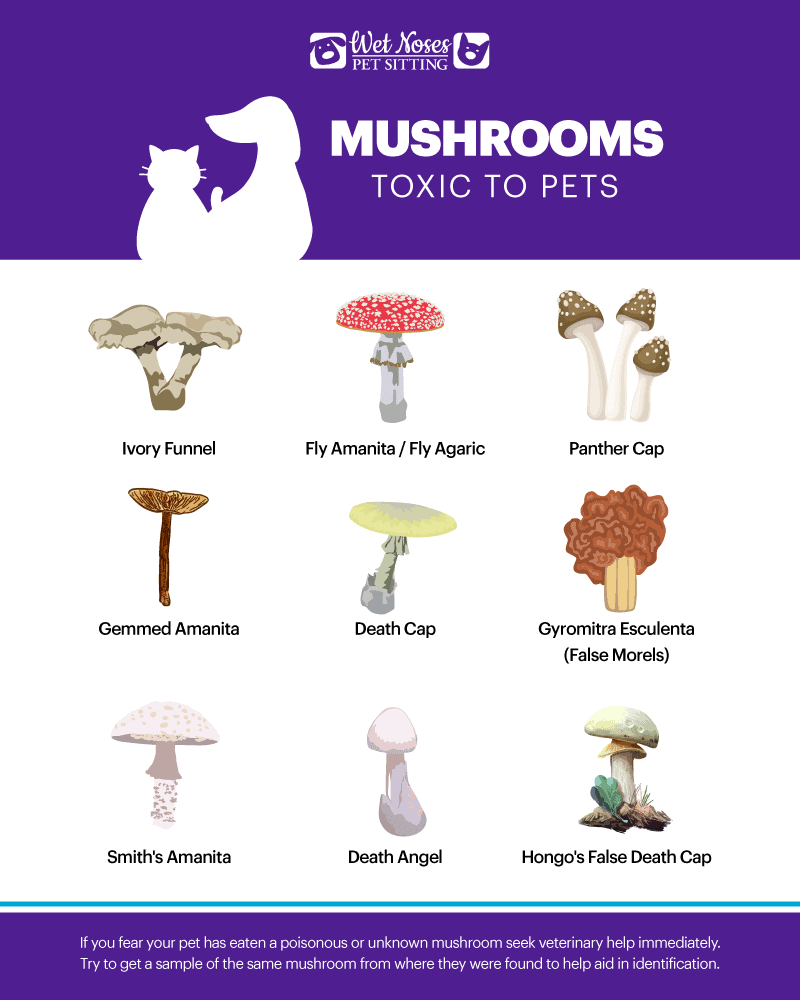 Mushrooms Toxic to Pets Infographic
