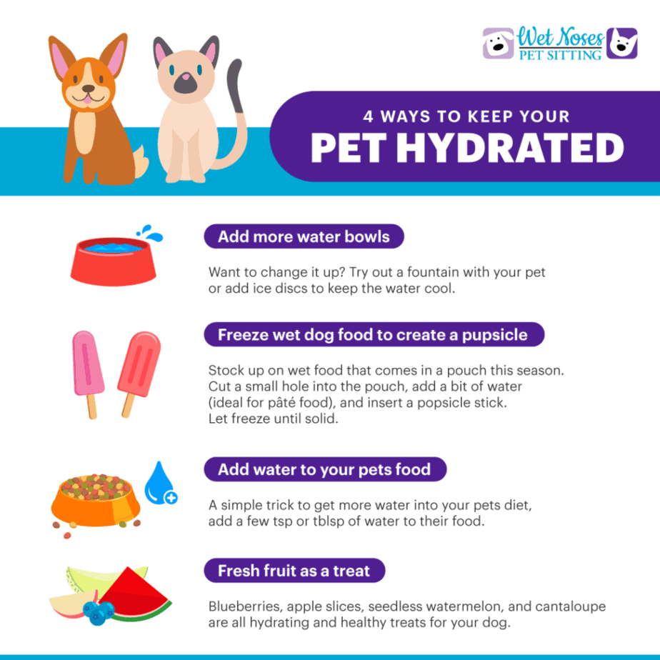 Pet Hydration Ideas Infographic