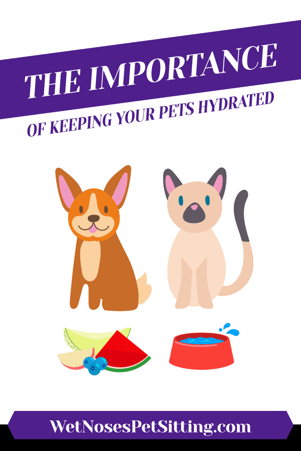 The Importance of Keeping Your Pets Hydrated Header
