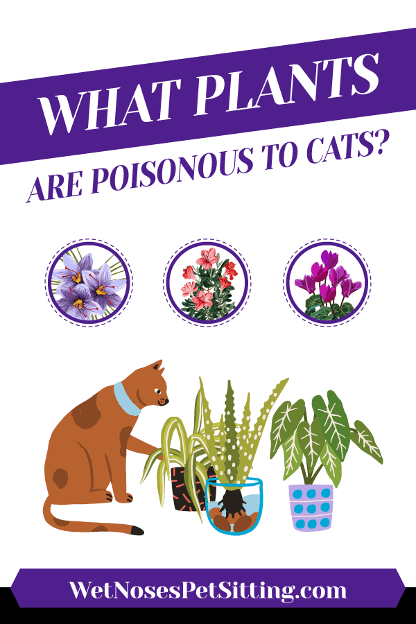 What Plants are Poisonous to Cats Header