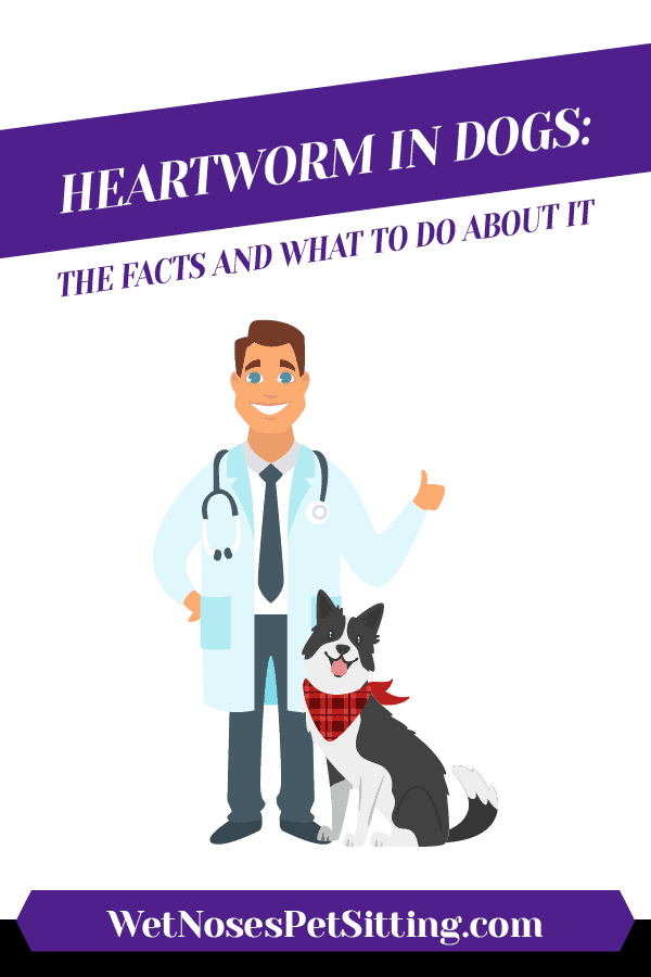 Heartworm in Dogs: The Facts and What to do about it Header