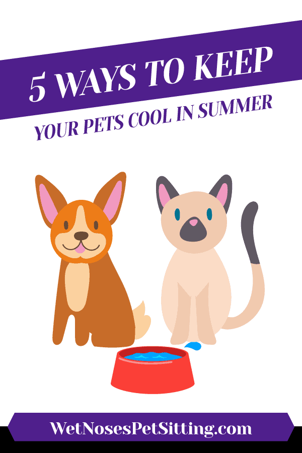 5 Ways to Keep Your Pets Cool in Summer Header