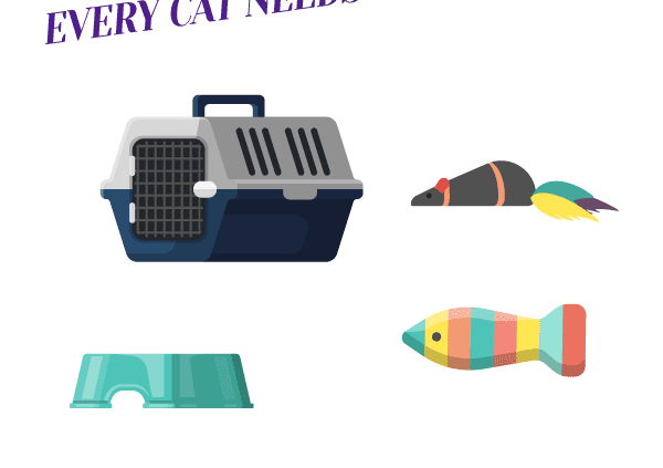 5 Cat Products Every Cat Needs in their Life Header