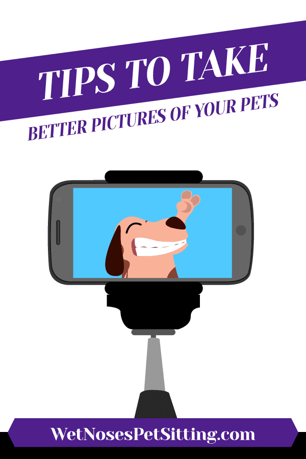 Tips To Take Better Pictures Of Your Pets Header