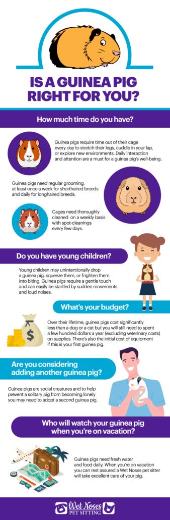 Guinea Pig Infographic
