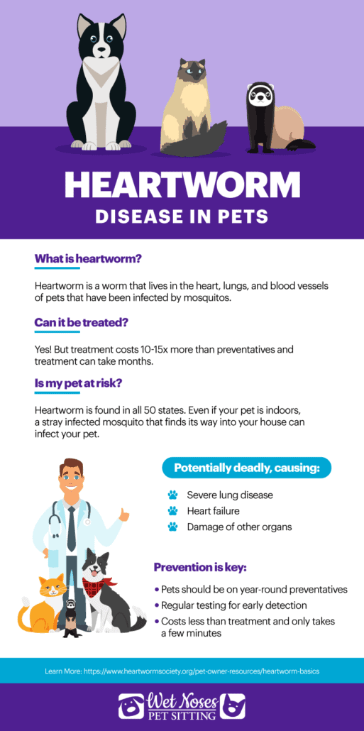 Heartworm Disease in Pets Infographic