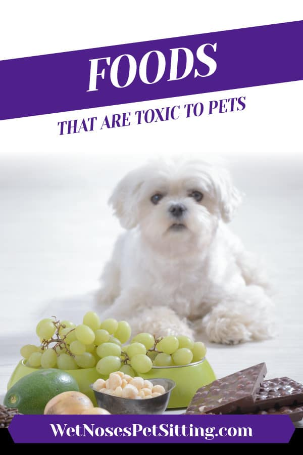 Foods that are Toxic to Pets Header