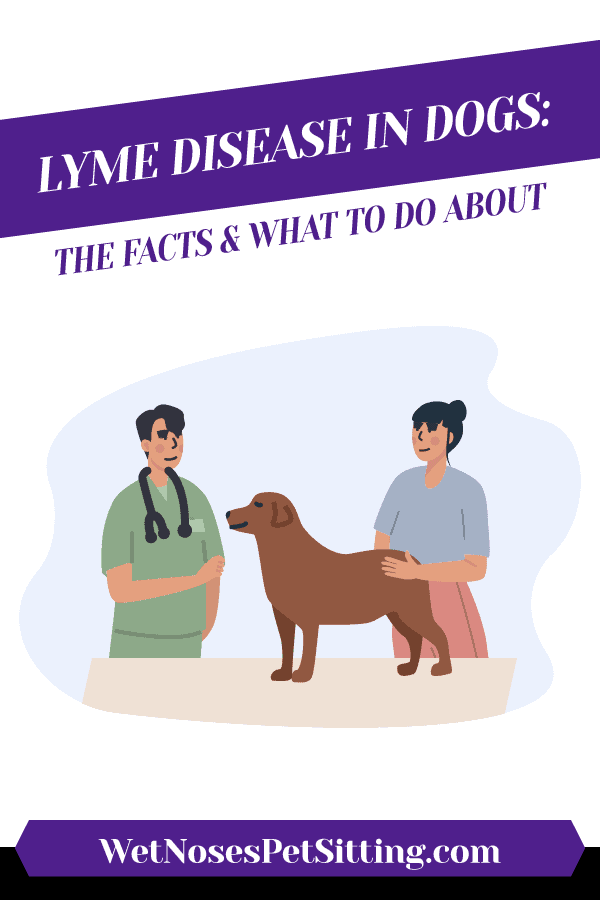 Lyme Disease In Dogs: The Facts & What To Do About Header