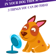 Preventing Heatstroke In Your Dog This Summer: 3 Things You Can Do Today Header
