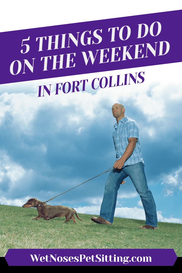 5 Things to Do on the Weekend in Fort Collins Header