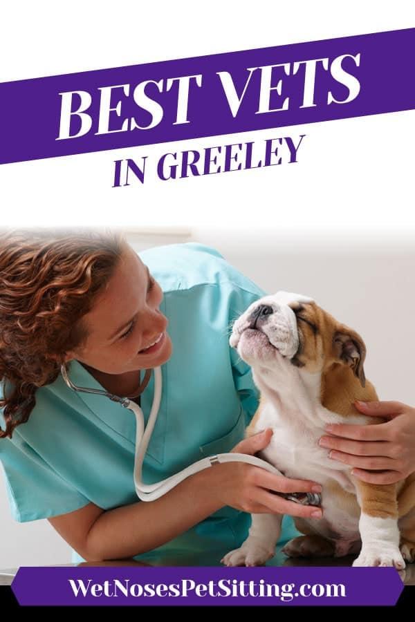 Best Vets in Greeley, Colorado Header