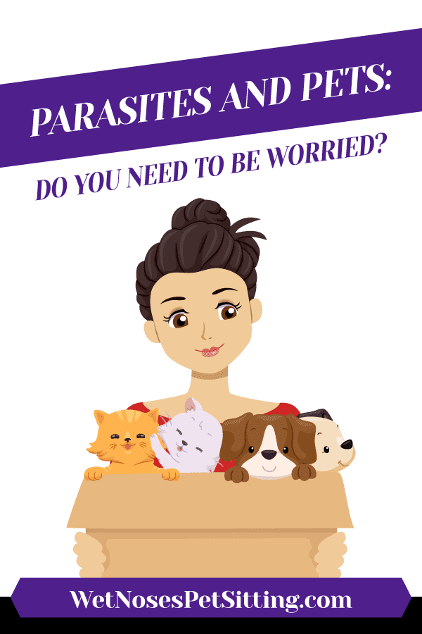 Parasites and Pets: Do you need to be worried? Header