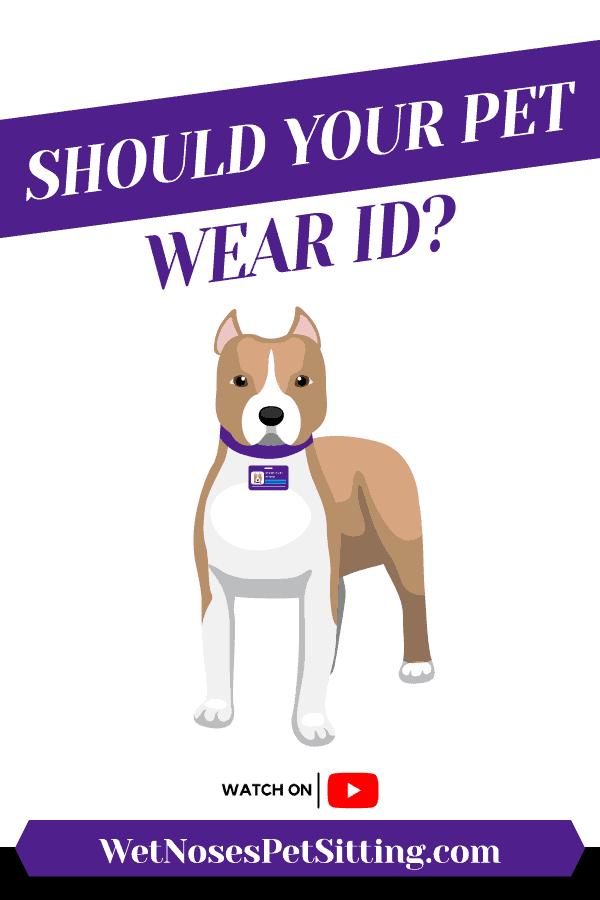 Should Your Pet Wear ID? Header