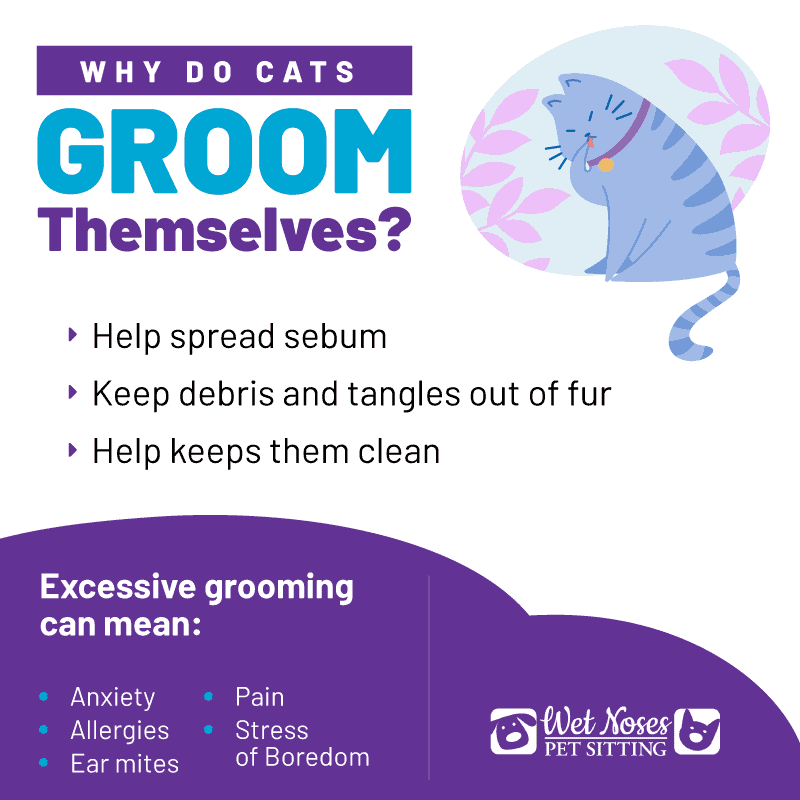Why do cats groom themselves infographic?